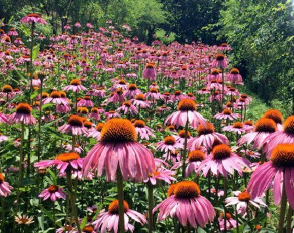 Superare i disagi, evolvere con i fiori
