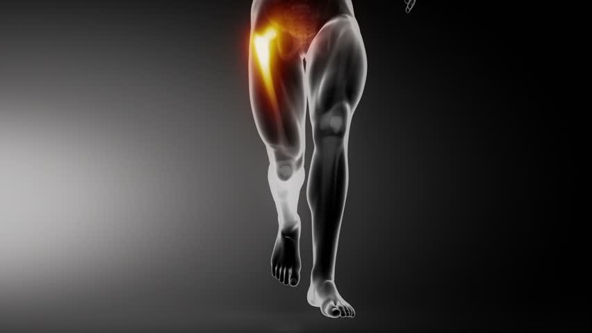 Apparato osteoarticolare e muscolare Santiveri