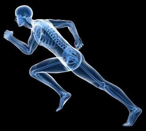 Apparato osteoarticolare e muscolare Solgar