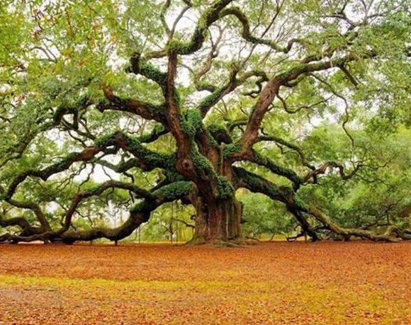 L'albero dei desideri – Osho